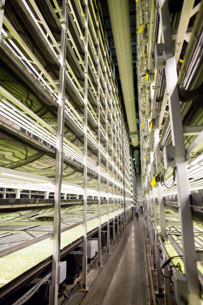An image of the vertical farm, with plants growing on each shelf