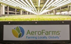 AeroFarms' signage with Singapore Airlines