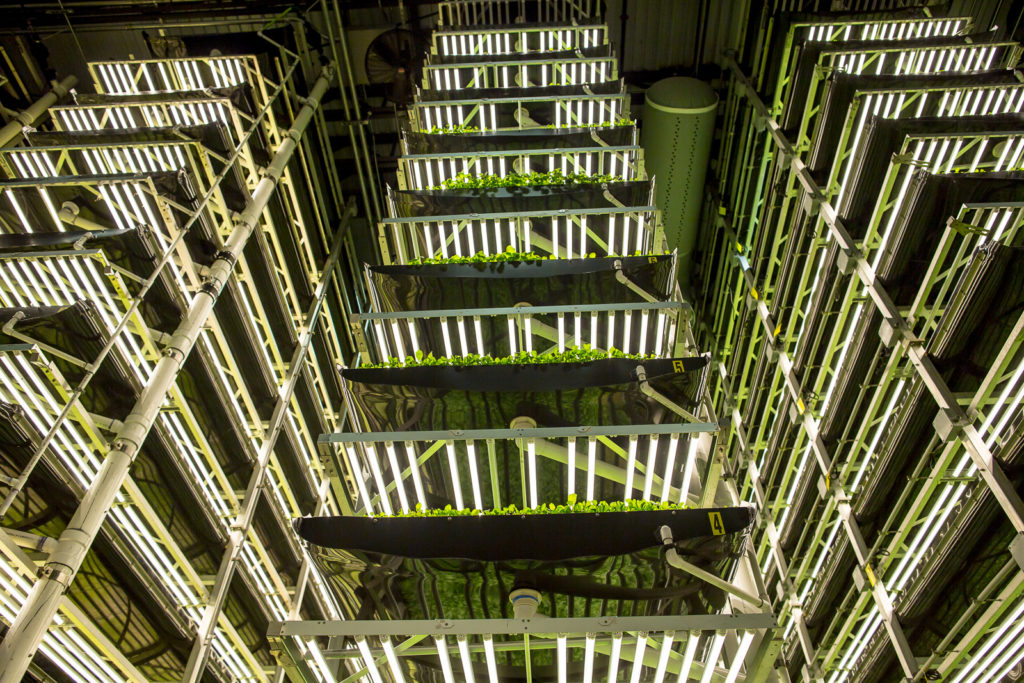 A vertical farm: greens and herbs are being grown from floor to ceiling. Singapore Airlines AEROFARMS