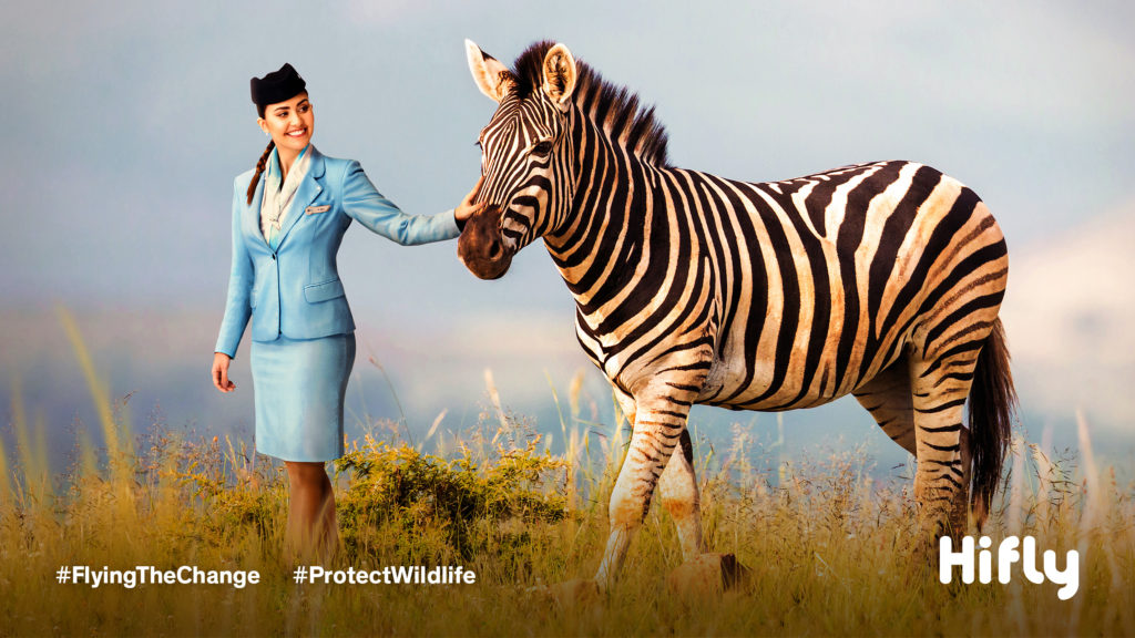 Flight attendant dressed ina blue uniform walking on the grasslands with a zebra