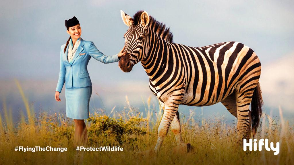 Flight attendant dressed ina blue uniform walking on the grasslands with a zebra