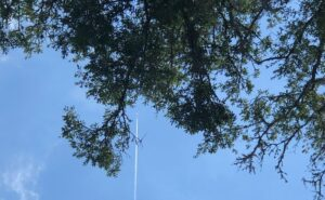 Aircraft flying overhead with green trees in view